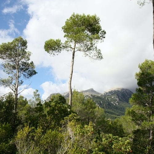 Guided walking in Majorca - spring greenary