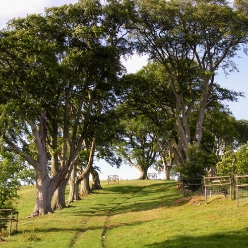 Guided walking in Shropshire Hills - Linley Beeches